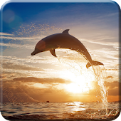 Dolphin Live Wallpaper PRO HD