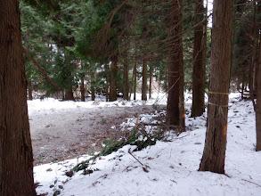 林道に無事合流