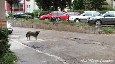 Photo: Aleea Nicolae Titulescu - (2013.06.27)