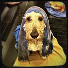 Photo: I iz washed init!