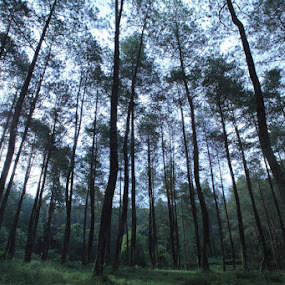 In The Forest by Steven Tessy - Landscapes Forests ( forest )