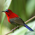 Asian Birds Sounds Free