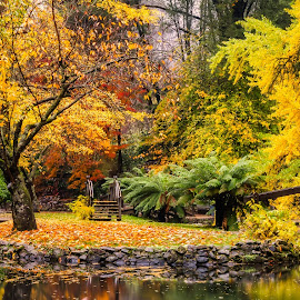 Autumn Colours. by Keith Walmsley - City,  Street & Park  City Parks ( orange, red, victoria, pond, green, leaves, yellow, australia, autumn, trees, water, landscape )