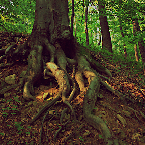 roots by Miro Polča - Landscapes Forests