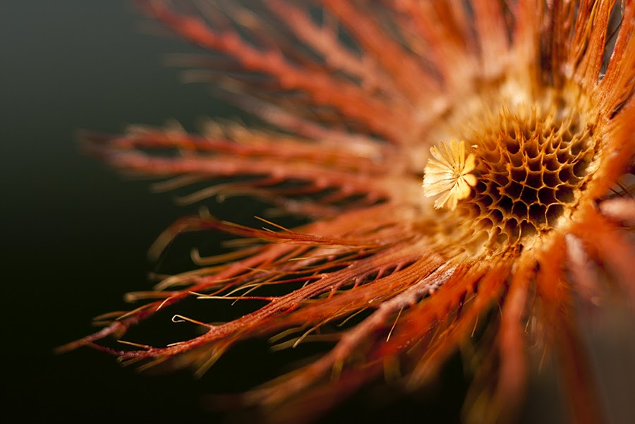 Dry by Marcelle Robbins - Nature Up Close Flowers - 2011-2013
