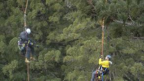 Climbing Redwood Giants thumbnail