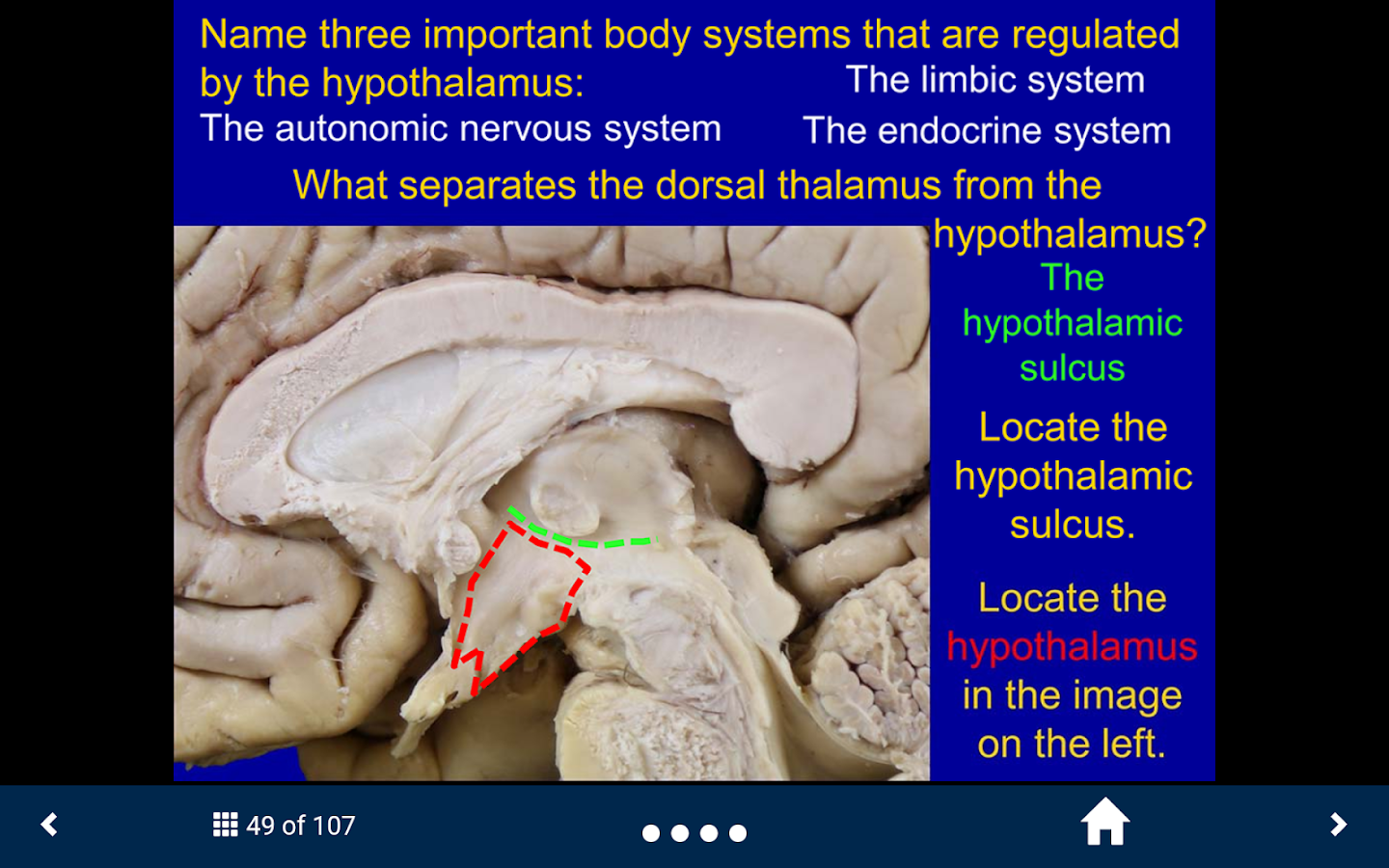 Neuroanatomy - SecondLook- screenshot