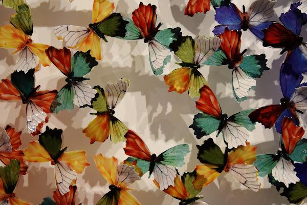 Milioni di farfalle di Ilaria Bertini