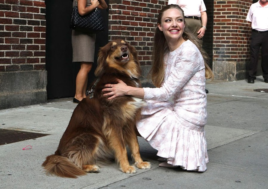 Perros acogidos por famosos: Amanda Seyfried y Finn