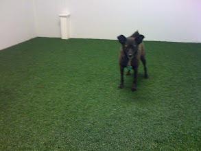 Photo: Home away from home: the Dulles Airport pet relief area