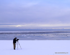 Photo: Steve birding at the mouth of the Kasilof River, Cook Inlet, with Mt. Iliamna in the distance