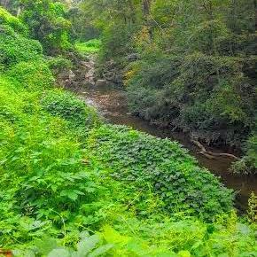 Proctor Creek at Grove Park.jpg