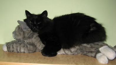 Photo: Kitty