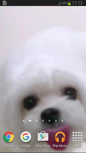 玩免費個人化APP|下載犬舐める画面ライブ壁紙 app不用錢|硬是要APP