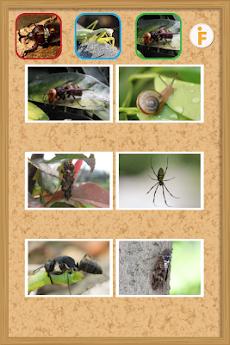 とびだす昆虫園-赤ちゃん・幼児・子供向け知育アプリのおすすめ画像3