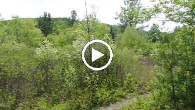 Video: We had a snake encounter and then made this video.