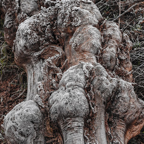 Giant Tree Squid by Mathan Tenney - Nature Up Close Trees & Bushes ( dead wood, creepy, creepy tree, knotty, wood, monster, downed tree, log, dead tree, weathered, gnarled tree, tree monster, twisted, twisted log, tree, creepy log, knobbly, gnarled, knobbly tree, dead,  )