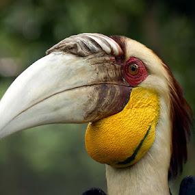 by Deddy Setiawan - Animals Birds