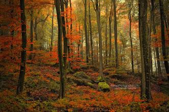 Photo: Bonjour tout le monde,  La plus belle saison de l'année se termine déjà... définitivement trop courte!  Inspiration : http://www.naturephotographie.com/photographes-du-monde/ ebook : http://www.naturephotographie.com/blog/paysages-naturels-et-photographie/ Textured : http://www.naturephotographie.com/category/portfolios/texture/