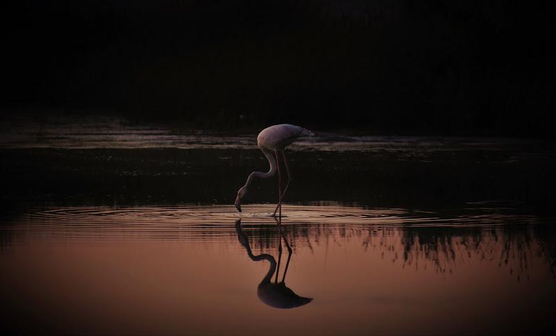 Un tramonto.....un fenicottero di ombra