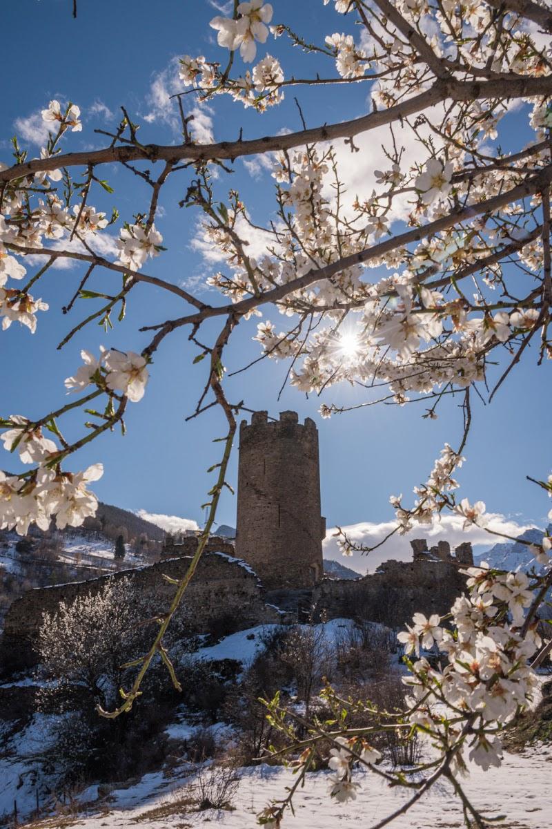 Le pazzie di marzo: neve fresca e alberi in fiore di Eli2019