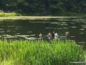 Photo: Hey where did everybody go geese friends on Half Moon State Park by Mary Ann Black