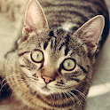 Cat Breeds - Identify Your Cat icon