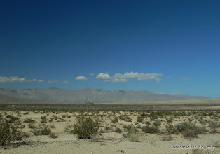 Photo: The vegetated fringe of Clark Dry Lake; Anza Borrego Desert State Park