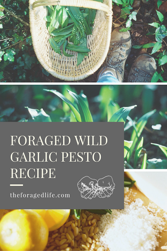 Make your own foraged wild garlic pesto | Recipes by The Foraged Life