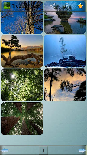 Tree Images and Backgrounds