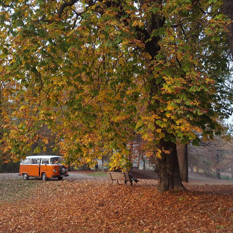 Arancio d'autunno di Sony8