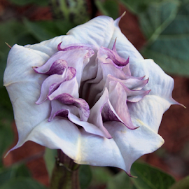 by Darrell Tenpenny - Flowers Single Flower