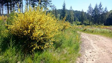 Photo: Zoveelste wandeling, nu richting de Cascade de la Pisserote