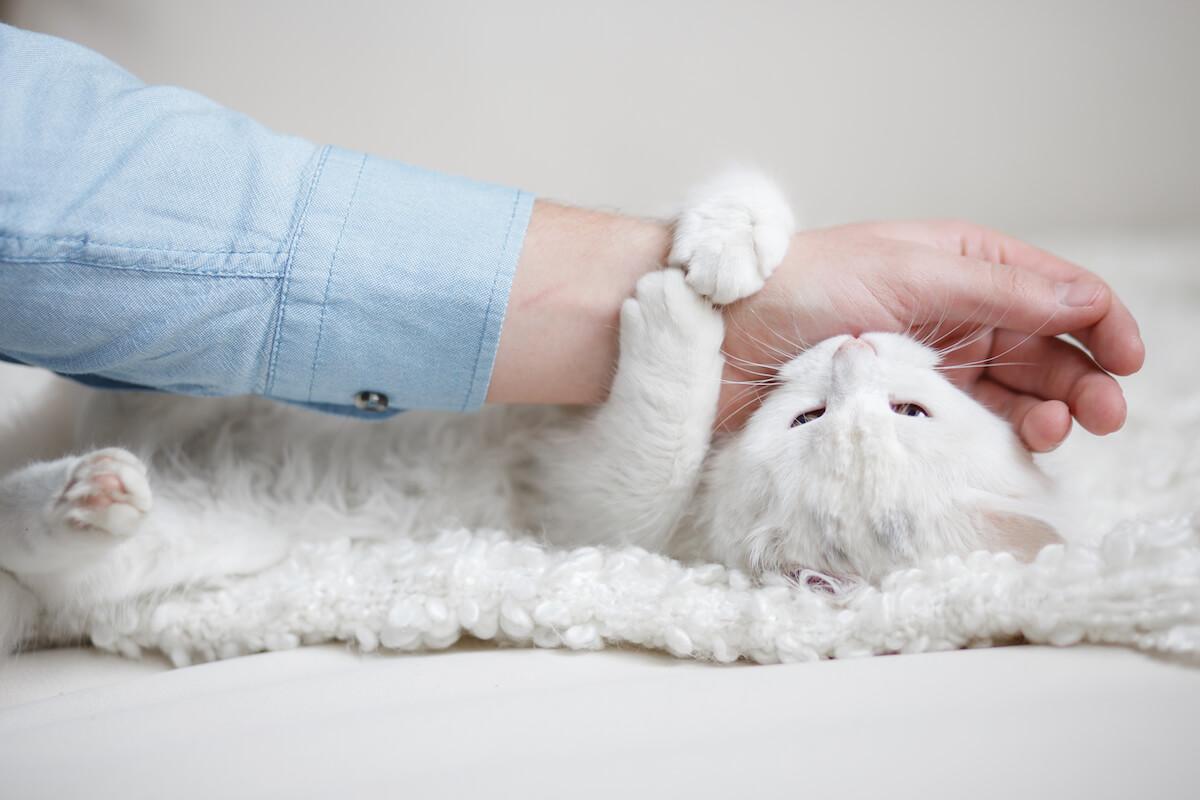 pourquoi les chatons mordent-ils ?