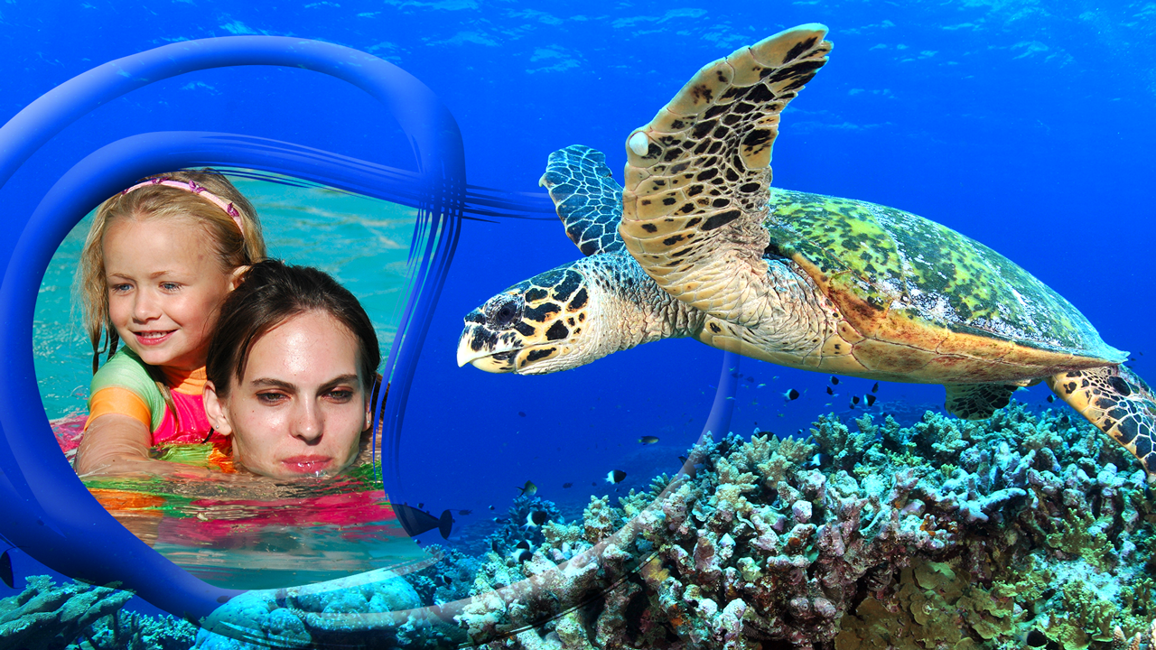 sea turtle photo frames android apps on google play