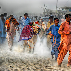 S14 by Abdul Rehman - People Street & Candids ( running, culture, cholistan, cultural heritage, dust, bull,  )