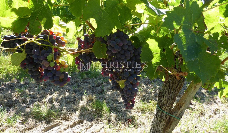 Vineyard with pool Bordeaux
