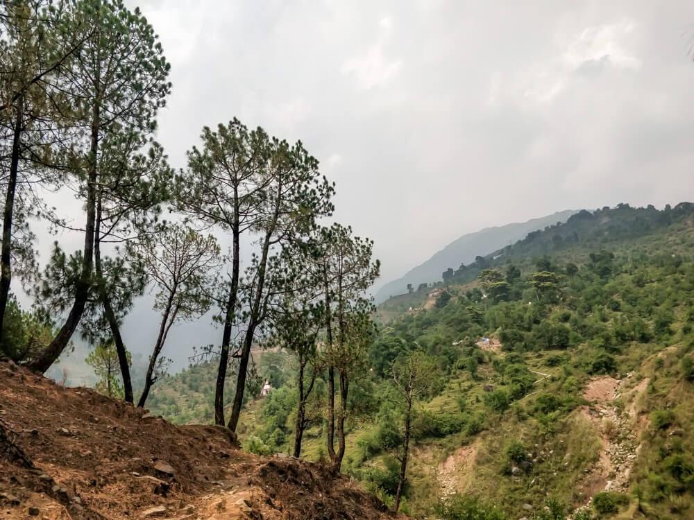 bhagsu+to+dharamshala+hike+jungle+trails+near+dharamshala+himachal+pradesh