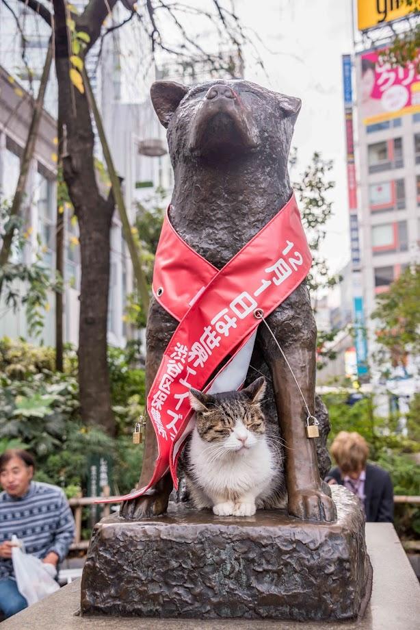 Hachiko inmortalizado en una estatua.