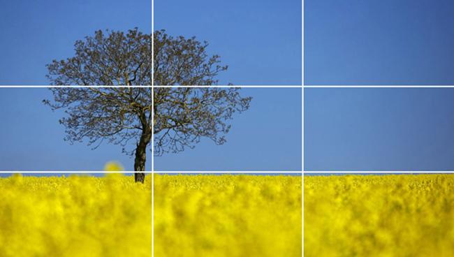Rule-of-Thirds-Tree.jpg
