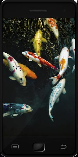 鯉魚|玩娛樂App免費|玩APPs