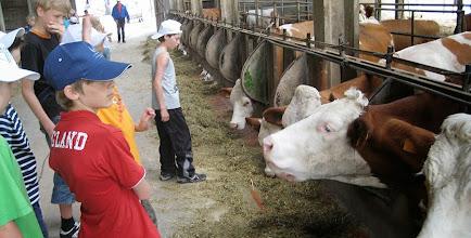 Photo: In visita alla stalla: curiosi di vedere le mucche