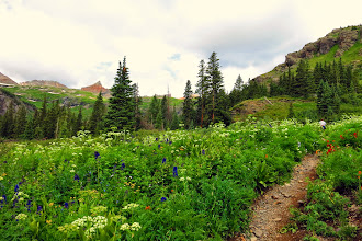 Photo: AMAZING wildflower display on Ice Lakes Hike
