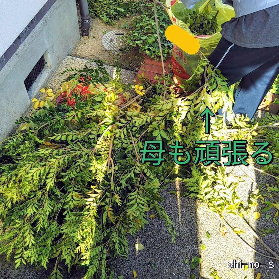 落ちた枝をゴミ袋に入れる母