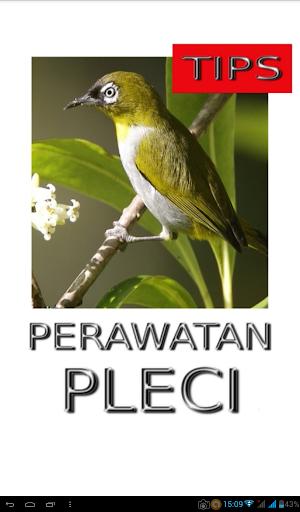 Tips Perawatan Burung Pleci