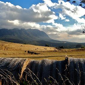 Tasmanian Landscape by Oona Tully - Landscapes Mountains & Hills ( landcsape, tasmnaia, australia )