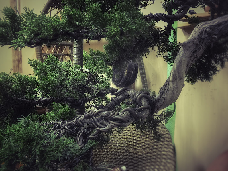 Bonsai di nickfor