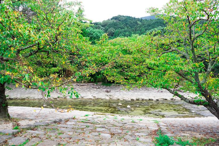 SL R230の福岡,五ケ山ダム,小川内の杉,車以外の🐢活,嫁は二日酔い🤮に関するカスタム&メンテナンスの投稿画像8枚目