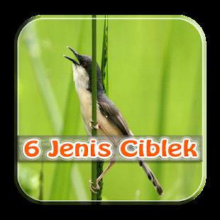 Master Kicau Ciblek 6 Jenis - náhled