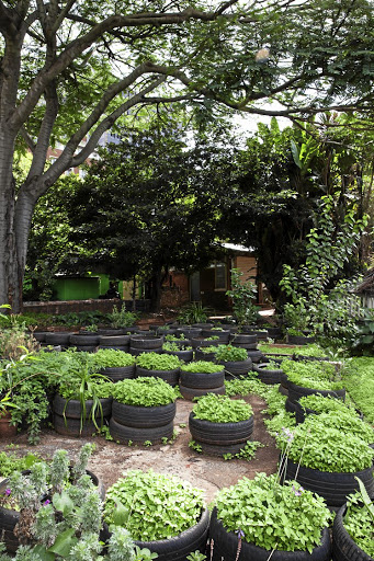Herbs — and a vast quantity of blackjacks — burst from stacked tires at the GreenHouse Project